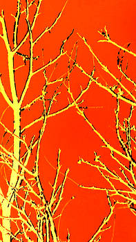 Colette Merrill - Colorized Embossed Trees