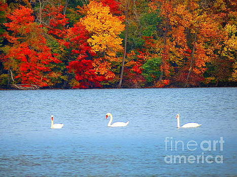 Colors And Swans  by Jack Martin