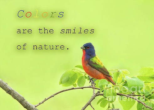Colors are smiles of nature by Sari ONeal