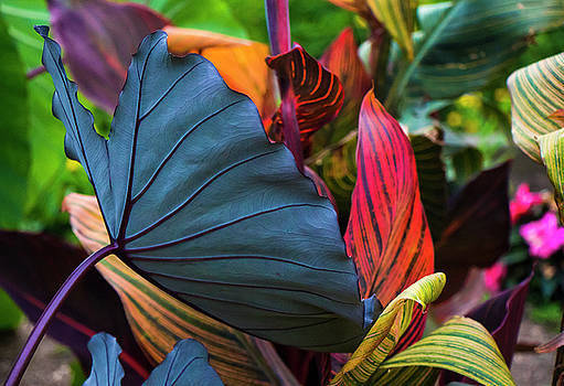 Colors by Kaos Studios