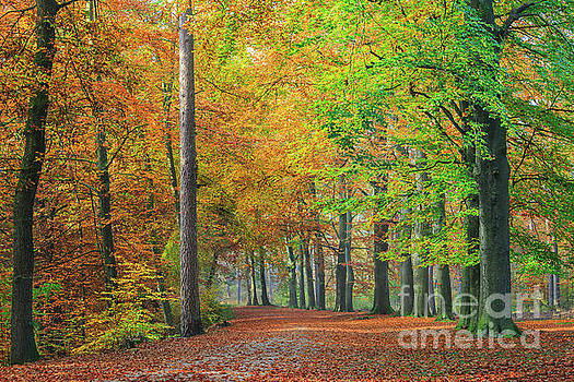 Colors of an autumn forest  by IPics Photography