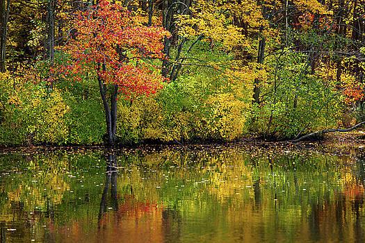 Karol Livote - Colors Of Autumn