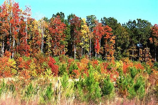 DONNA BENTLEY - Colors Of Fall
