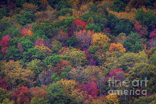 Colors of Fall by Joan McCool