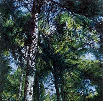 Colors of Green by Susan Sarabasha