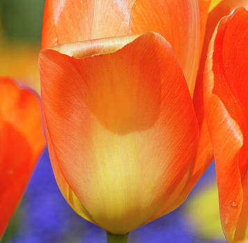 Colors of spring by Elvira Butler