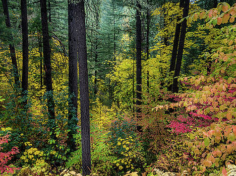 Colors Rushing In by Michele James
