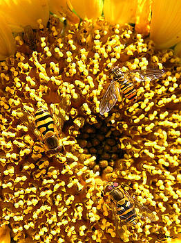 Rasma Bertz - Colour of Honey