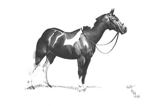 Coloured horse by Ed Teasdale