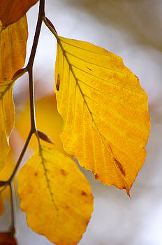 Angela Doelling AD DESIGN Photo and PhotoArt - Colours of Autumn