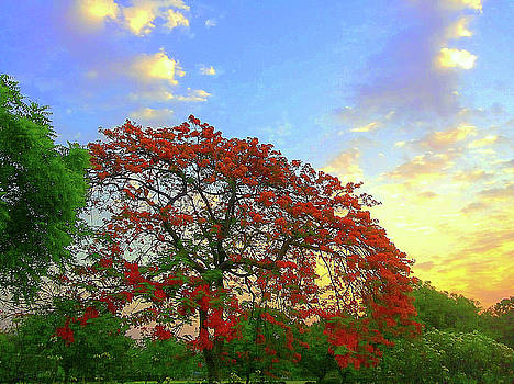 Colours of nature by Atullya N Srivastava