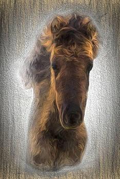 Colt Criollo Horse by Henri Leduc