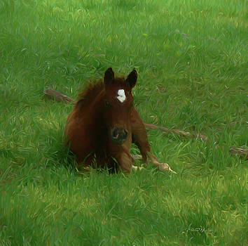 Colt in the Grass - Painting by Ericamaxine Price