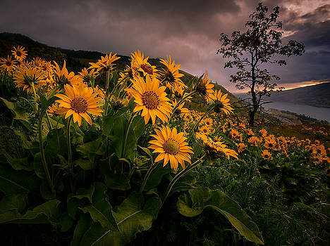 Columbia Gorge Joy by Dan Mihai