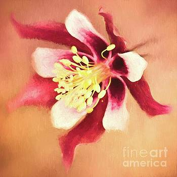 Columbine Flower by Pam  Holdsworth