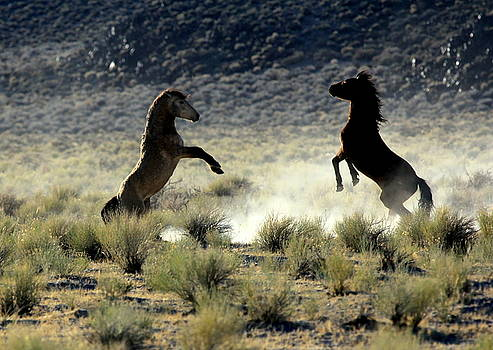 Combatants V by Ron  Romanosky