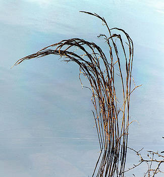 Combie Lake Reeds by Norman  Andrus