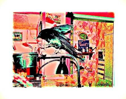 YoMamaBird Rhonda - Crow Dance
