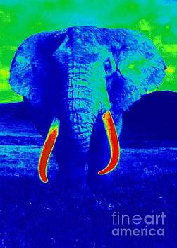 Heat Map Elephant Coming At You in About Ten Seconds by Richard W Linford