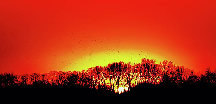 Coming Home to Roost at Sunset by Larry Jost