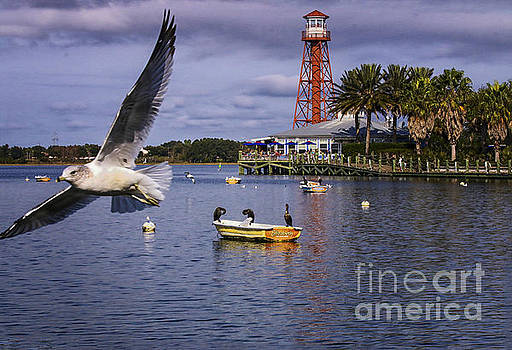 Coming In For A Landing  by Mary Lou Chmura