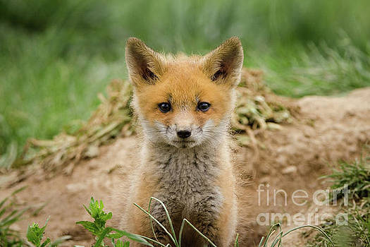 Coming Out Wildlife Photography Wall Art Print by Melissa Fague