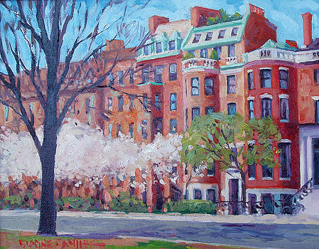 Comm Ave Magnolias by Dianne Panarelli Miller