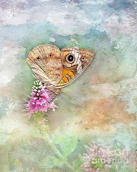Common Buckeye by Betty LaRue