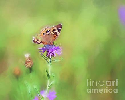 Common Buckeye Butterfly - Missing Pieces by Kerri Farley