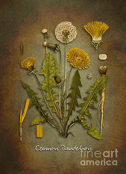 Justyna Jaszke JBJart - Common dandelion