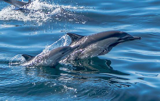 Randy Straka - Common Dolphin Calf and Mom
