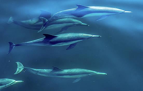 Common Dolphin Under The Surface by Randy Straka