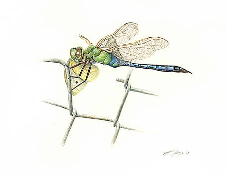Common Green Darner by Logan Parsons