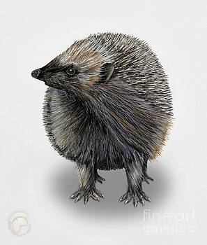 Common Hedgehog  Erinaceus europaeus - Herisson d Europe - Erizo by Urft Valley Art