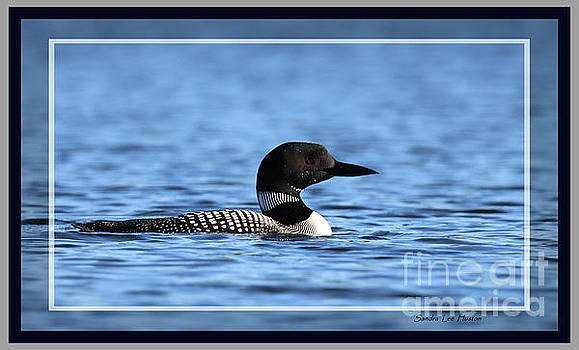 Sandra Huston - Common Loon, Framed