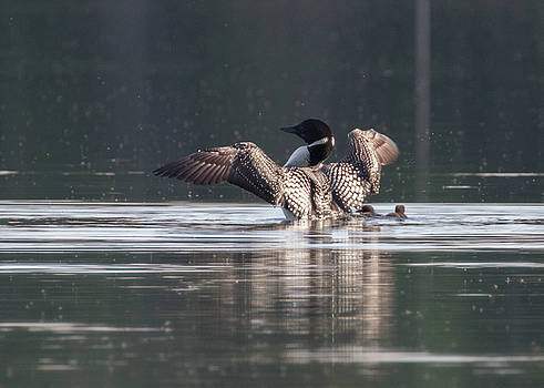 Dee Carpenter - Common Loon Stretch