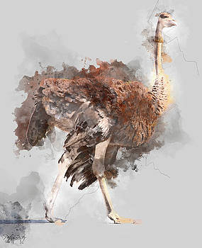 Common ostrich by Petrus Bester