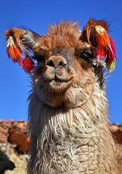 Como Se Llama by Skip Hunt