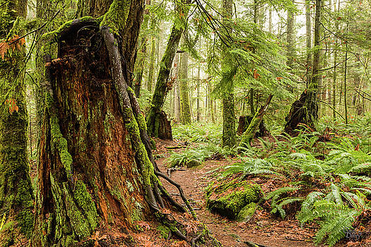 Comox Valley Forrest-3 by Claude Dalley