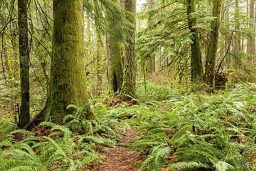 Comox Valley Forrest-5 by Claude Dalley