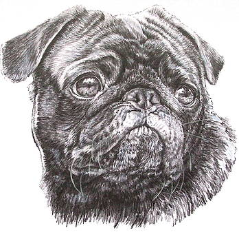 Barbara Keith - Companion Pug