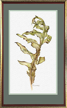 Compass Plant, Fall by Catherine Twomey