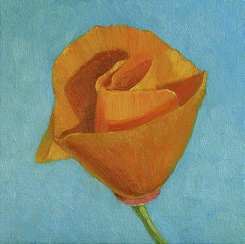 Complementary Poppy by Amy Tennant