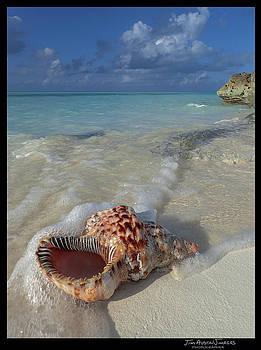 Conch Beach Bahamas by Jim Austin Jimages