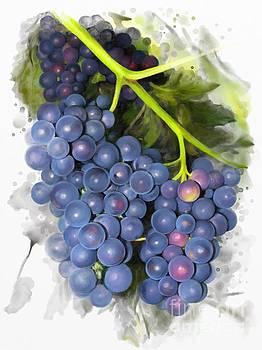 Concord grape by Ivana Westin