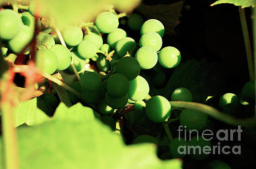 Concord Grapes 5 by Janie Johnson