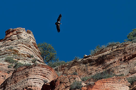 Condor Above Angel's Landing by Jeff Clay