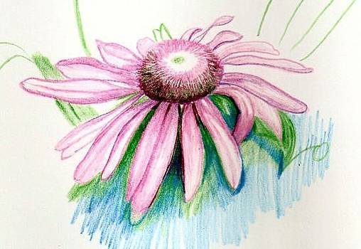 Cone Flower by Deb Stroh Larson