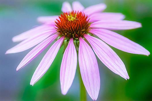 Cone Flower by Garvin Hunter