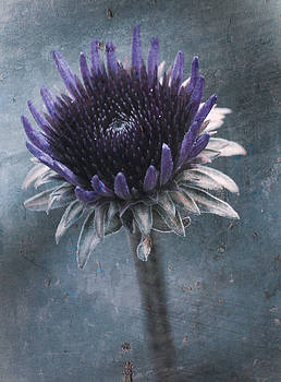 Cone Flower by Sheryl Bergman